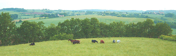 horses_long_grass