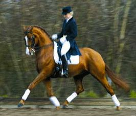 ultimate_dressage_holding