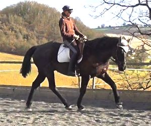 ultimate_dressage_kafa