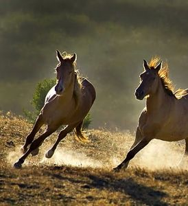 274xNxlunging_a_horse_wild_horses