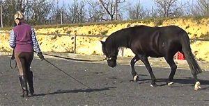 300xNxlunging_a_horse_rafi