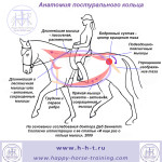 diagram_postural_ring-ru