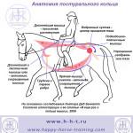 diagram_postural_ring-ru