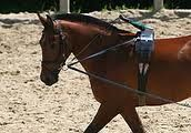 lunging_a_horse_draw_reins