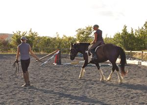 lunging_a_horse_first_riding