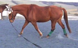 lunging_a_horse_hope
