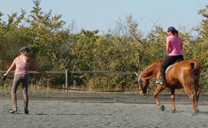 lunging_a_horse_lesson