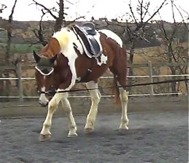 lunging_a_horse_mojo