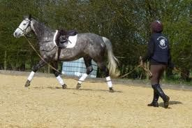 lunging_a_horse_no_contact