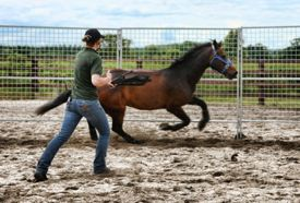 lunging_a_horse_round_pen