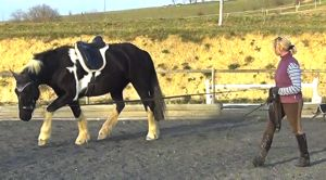 lunging_a_horse_totti2