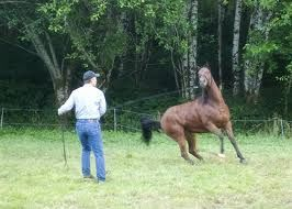 lunging_a_horse_violent