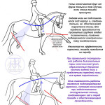 800xNxdressage_diagrams_diagonals.jpg