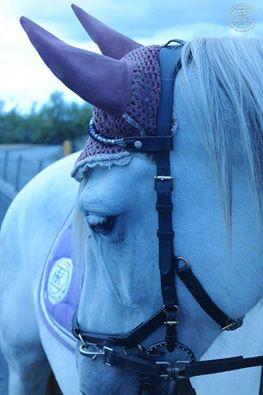 happy horse schaapje