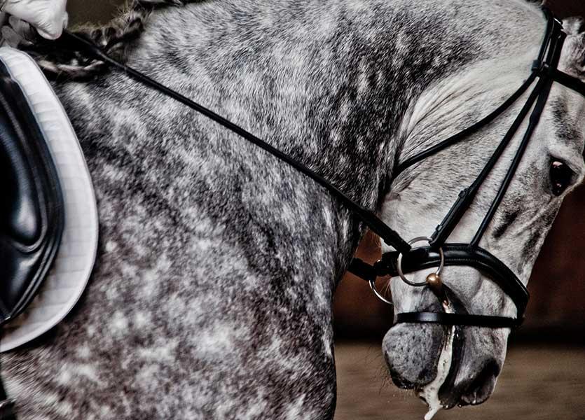 dressage-horse-heavy-hands