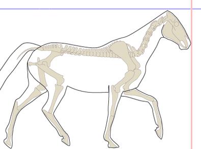 above_the_bit_neck_posture