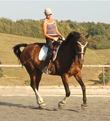 dressage_saddles_balanced_riding