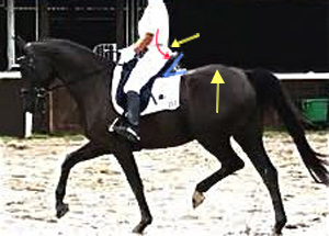 dressage_saddles_hollow