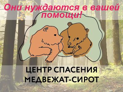 Центр спасения медвежат-сирот